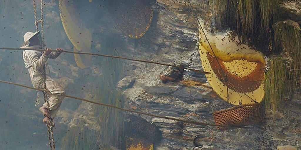 Honey Hunters Nepal